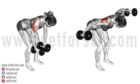 posterior deltoid workout with dumbbells