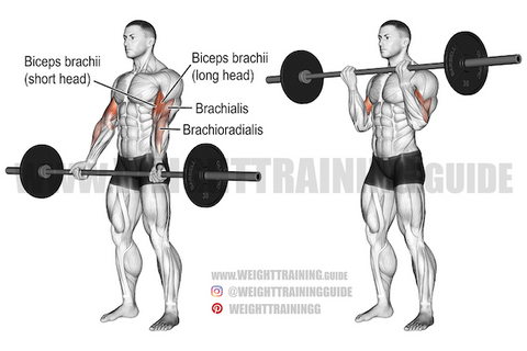 pull exercises for biceps
