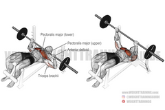 pushing exercises for chest
