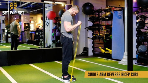 reverse bicep curl with bands