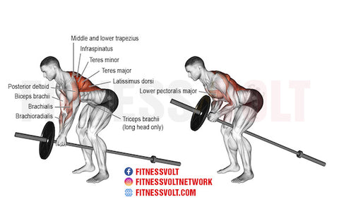 rhomboid exercises with barbells