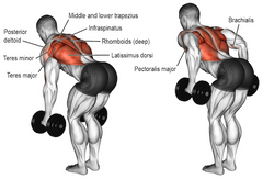 rhomboid exercises with dumbbells