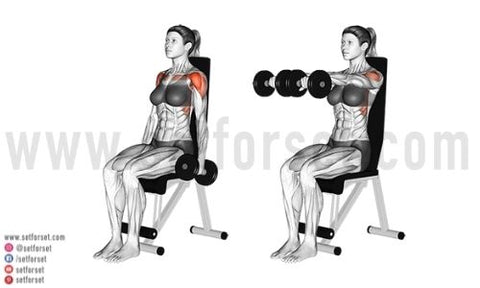 seated front raises