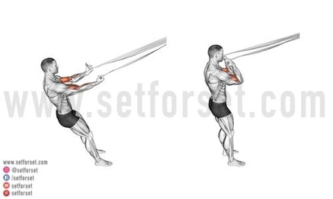 short head bicep exercises at home