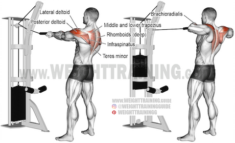 what exercises target the rhomboid muscles