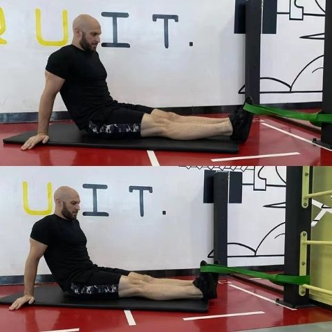 what is the tibialis anterior