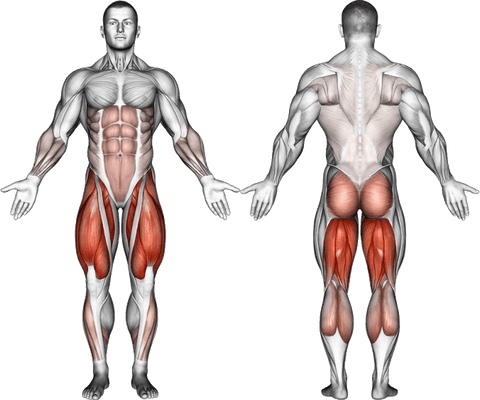 what muscles do squats work