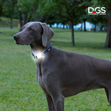 LED collar, LED dog collar, light up collar, visibility collar, dog collar, meteor collar