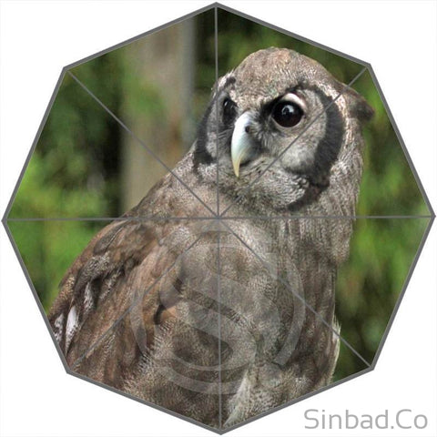 COOL OWL UMBRELLA DESIGN-Umbrella-Sinbadco