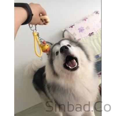 Creative Dog Claw light Key Chain - Holiday Gift-Sinbadco