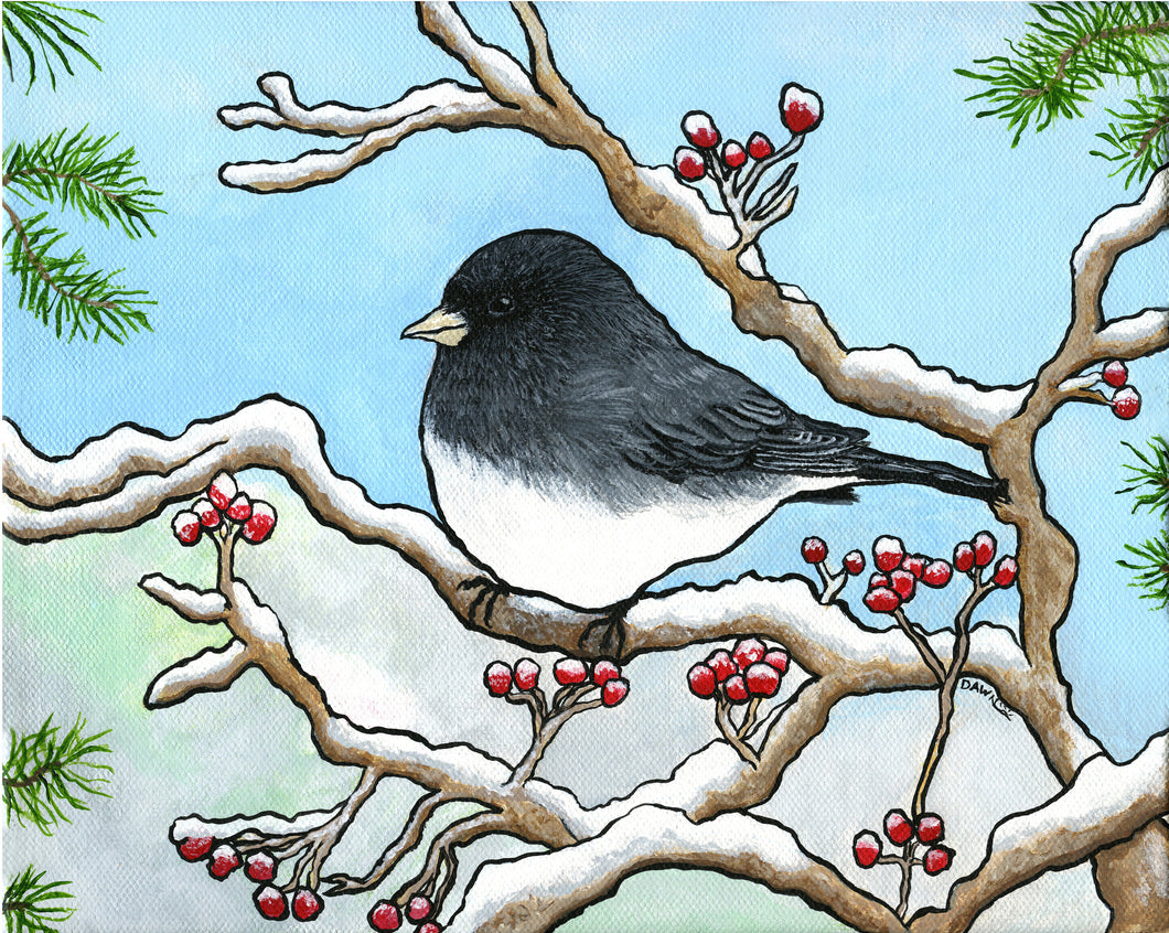 Snowbird-Dark Eyed Junco