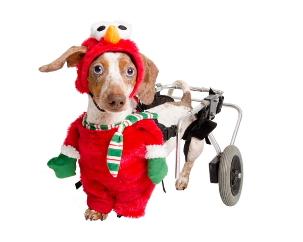 Santa Elmo Pet Costume Release!
