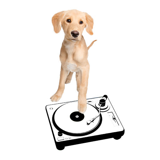 Intern DJ Mardi Pawty's Chill Playlist