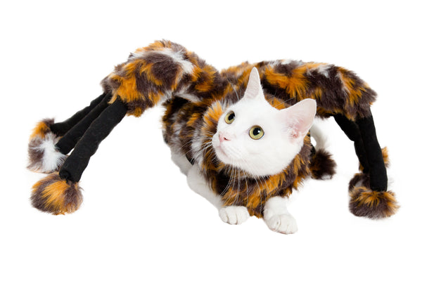 Here Kitty Kitty! It's Cat Costume Time!