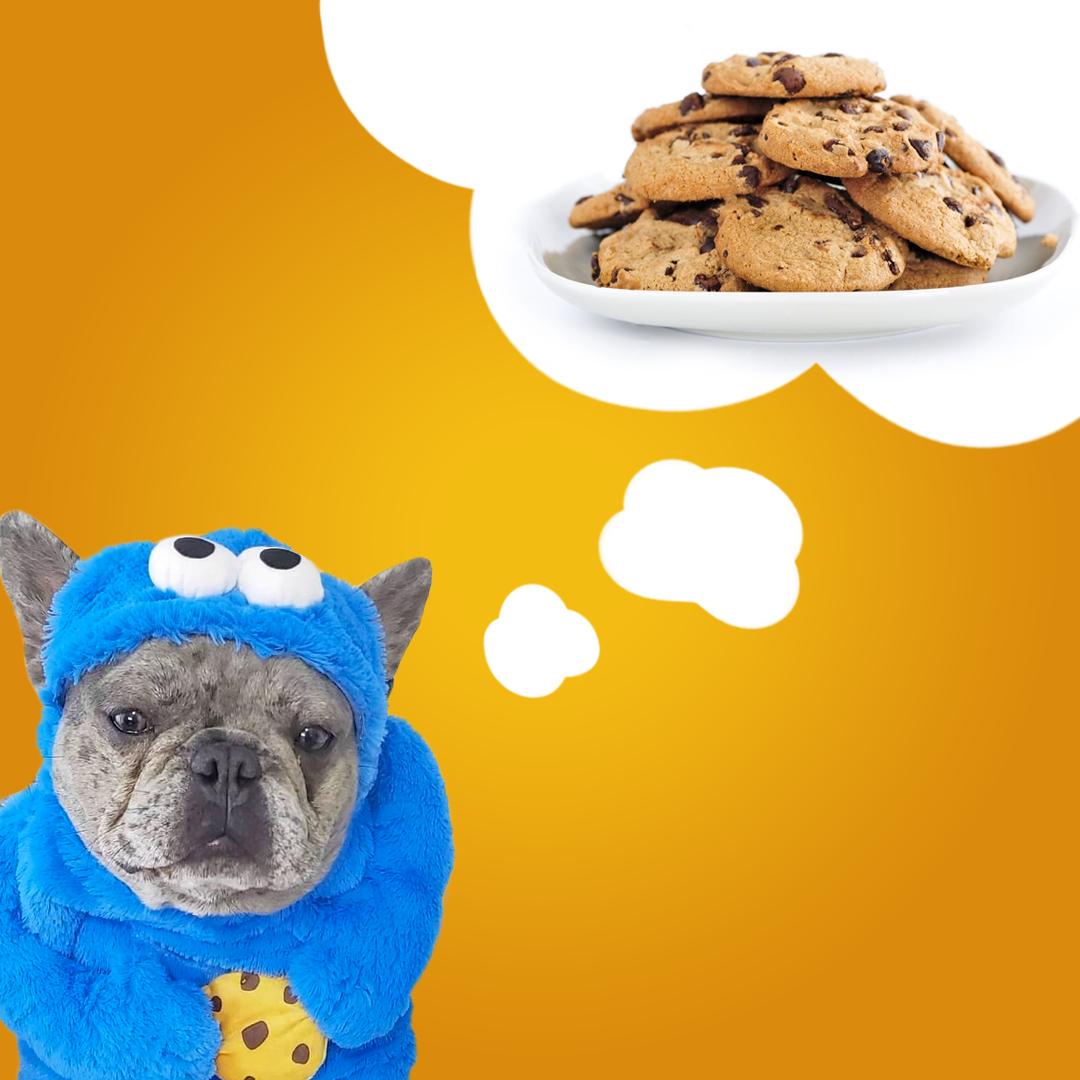 dog dressed in a Sesame Street Cookie Monster dog costume dreaming about cookies