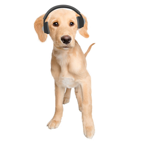 dog headphones dj music mix chill