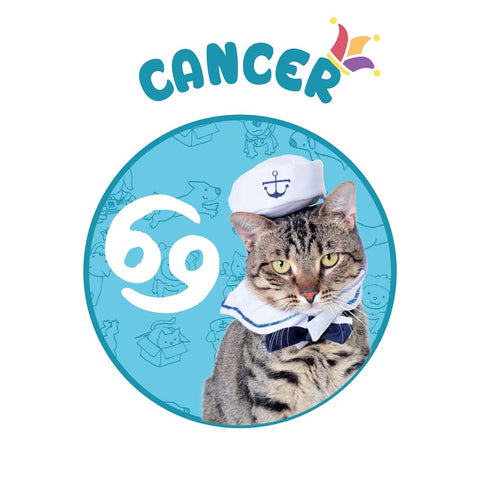 sailor cat costume cancer horoscope