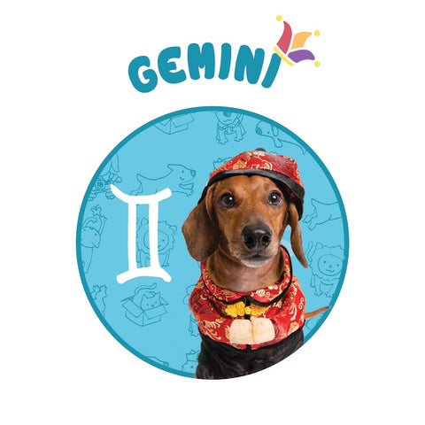 dog costume gemini hororscope