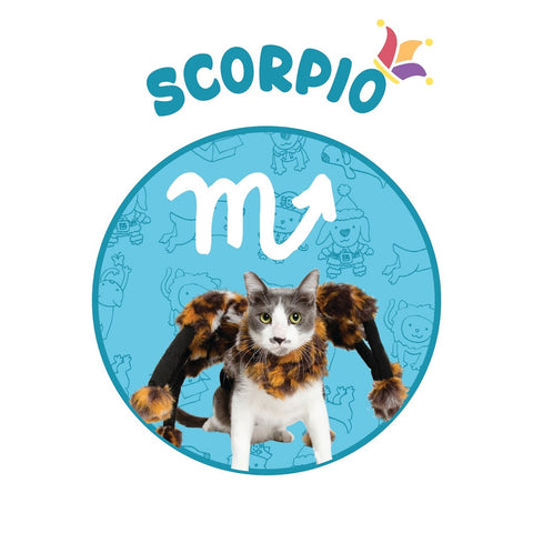 scorpio horoscope spider cat costume