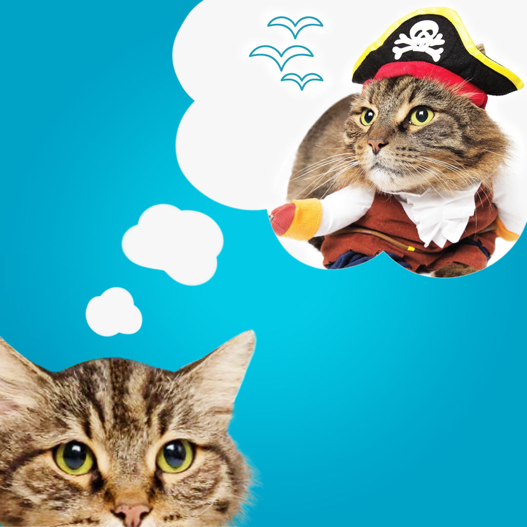 cat dreaming about being dressed up in a pirate cat costume and other halloween cat costume ideas