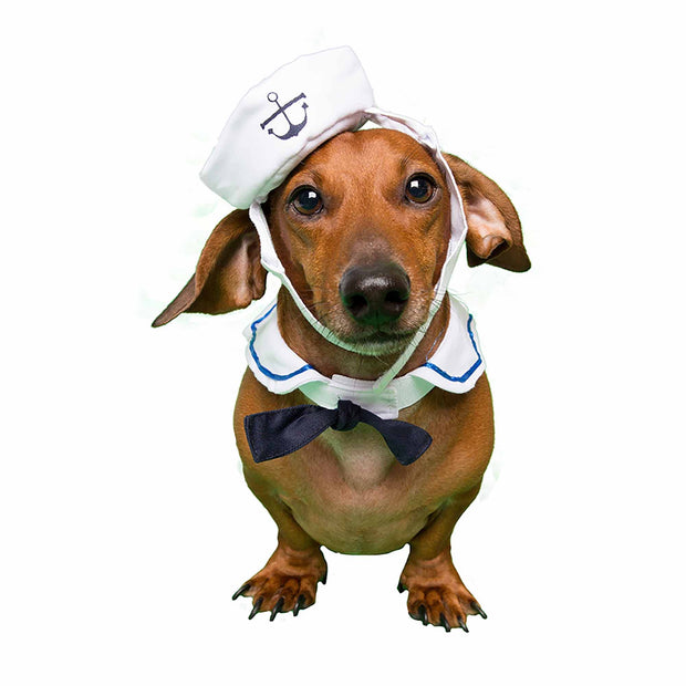 Small Dog Sailor Costume