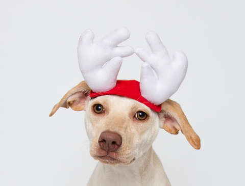 Pirate Dog Costume – Perfect for Stocking Stuffer