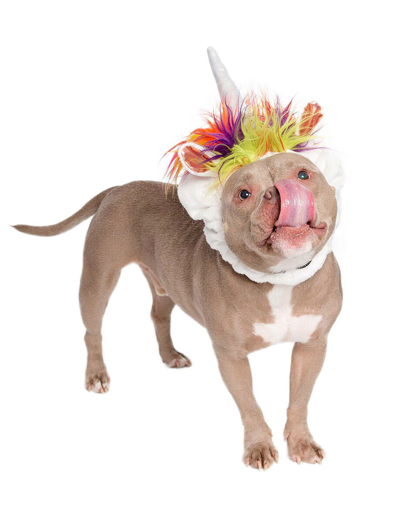 d36394eb4e6d9 ... Cat Costumes · Pet Horoscope · Blog. Magical Unicorn Dog Costume; Unicorn  Dog Costume; Unicorn Doggy Costume ...