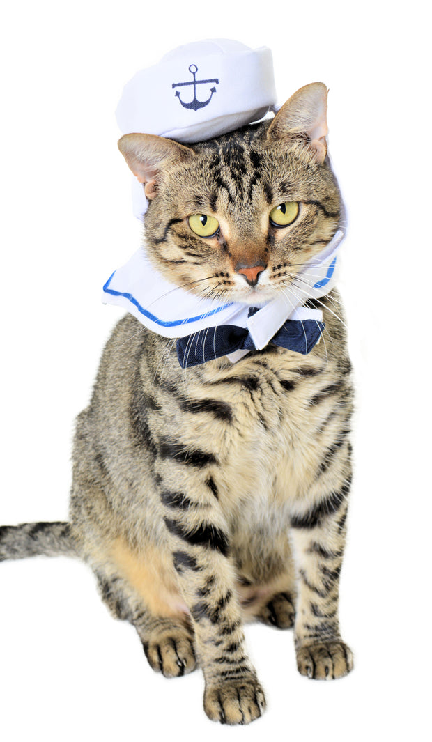 striped cat wearing a sailor cat costume