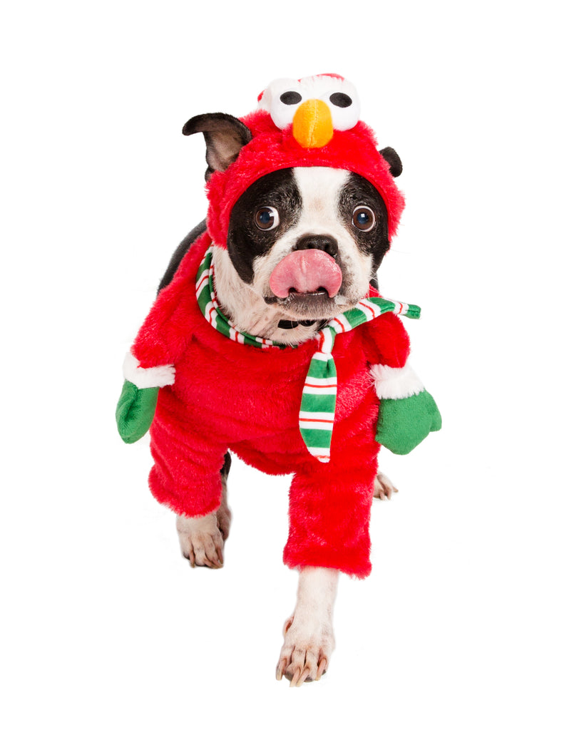 santa elmo dog costume