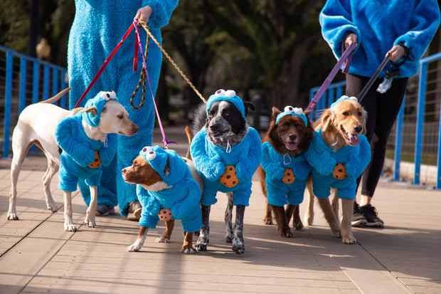 5 multiple breed dogs wearing cookie monster dog costumes on a walk