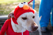 Sesame Street Elmo Dog Costume