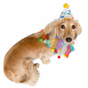 Birthday Celebration Hat & Collar for Dogs