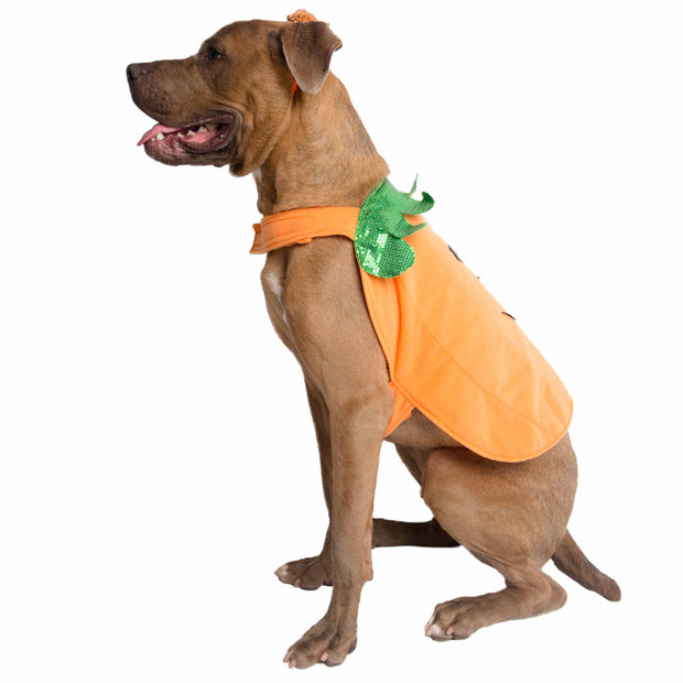 Halloween Pumpkin Dog Costume