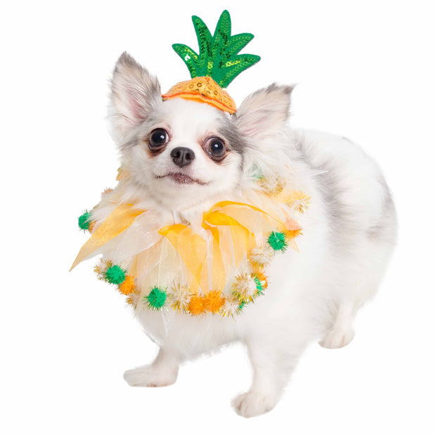 Pineapple Hat and Collar Dog Costume