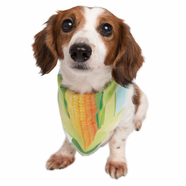Corn Pet Bandana