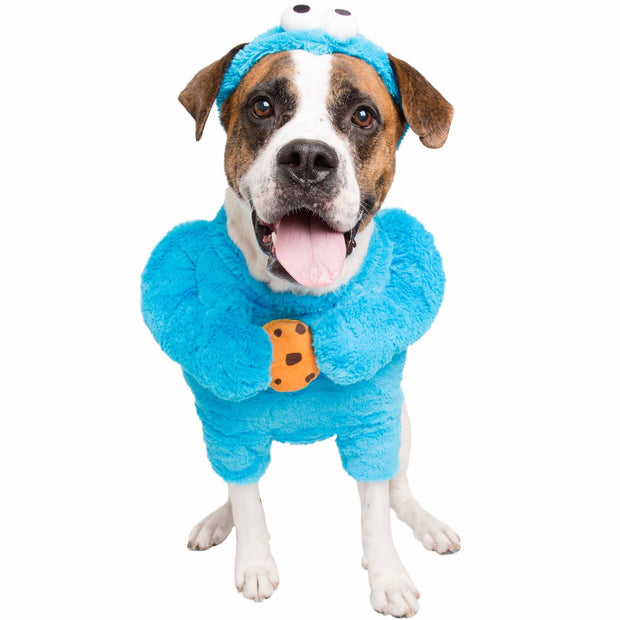extra large saint bernard dog wearing a Sesame Street blue Cookie Monster dog costume