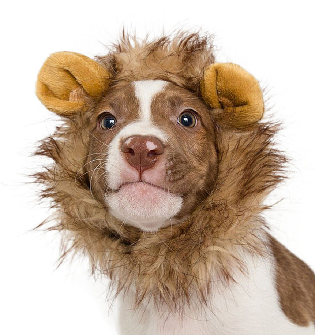 lion mane costume for small dogs