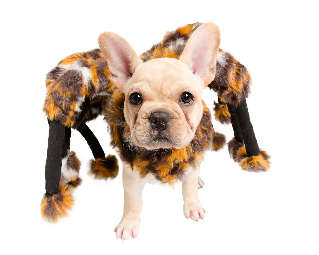 Scary Spider Dog Costume - FREE SHIPPING