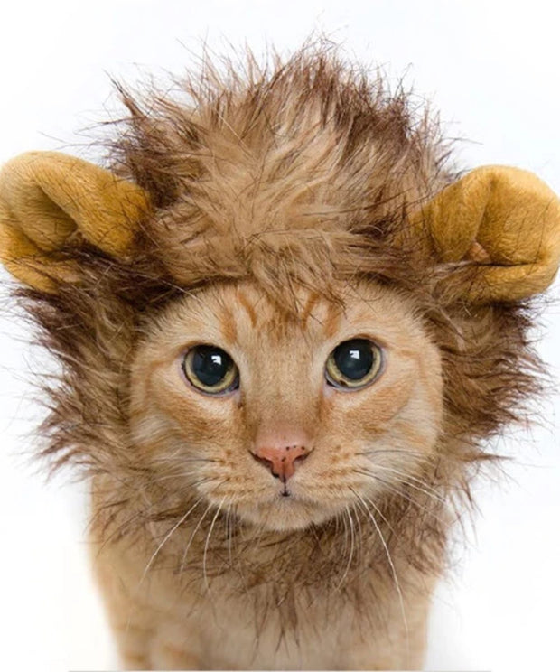 Orange cat dressed in Lion Mane Costume
