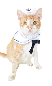 orange and white cat wearing a sailor cat costume