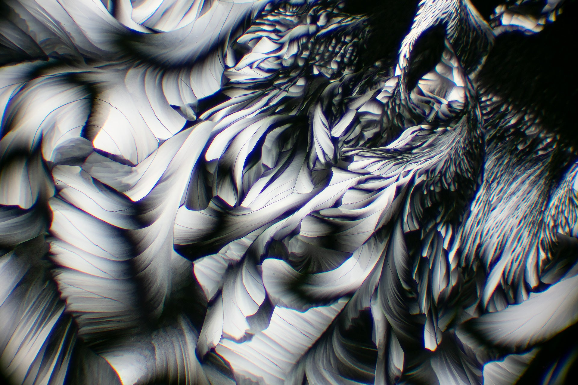 Crystals of Amino Acid Viewed in polarized light