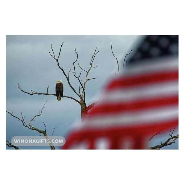 Bald Eagle With American Flag Winona Minnesota - Art Print - Kari Yearous Photography WinonaGifts KetoGifts LoveDecorah