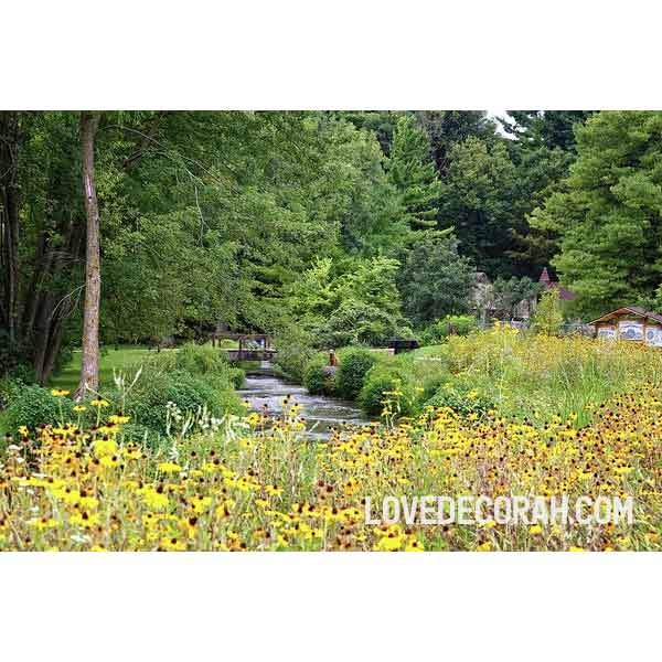 Siewers Springs Decorah Fish Hatchery With Coneflowers - Art Print