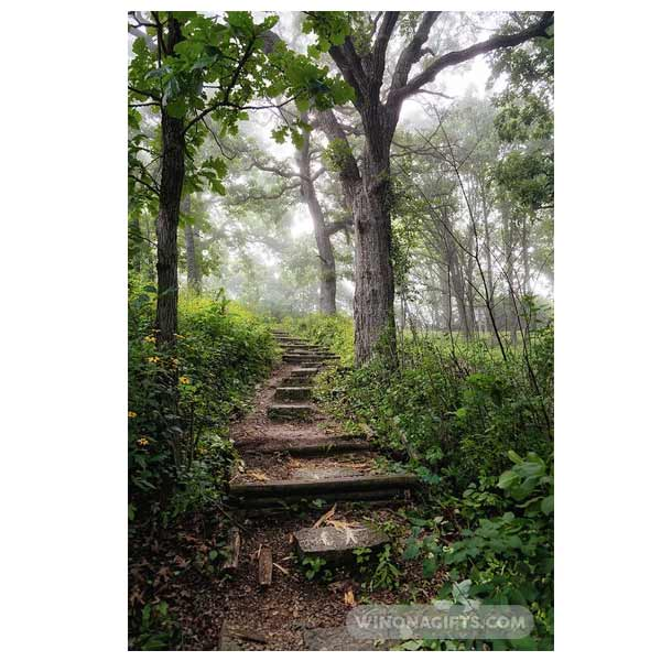 Foggy Garvin Heights Steps Winona Minnesota - Art Print