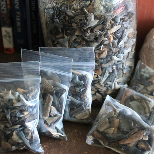 bags of fossil shark teeth for sale for collecting or jewelry making