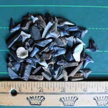 Bag of Fossil Shark Teeth (100+ pieces)