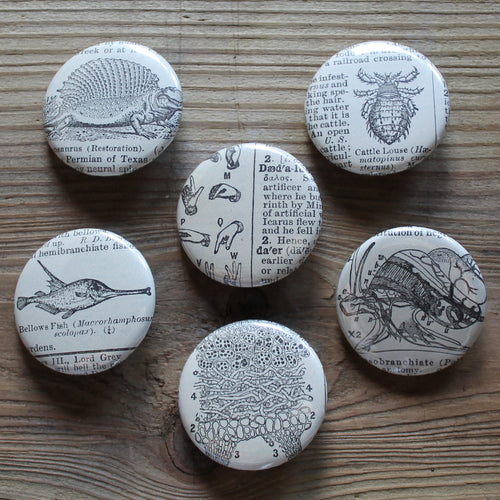 6 pinback buttons: Dinosaur, Insect, Fish, and other antique images - RadCakes Shirt Printing