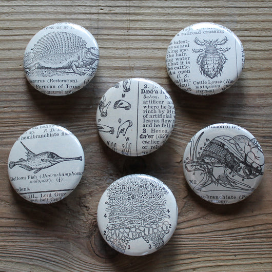 pinback button collection antique dictionary images dinosaur cattle louse fish snail