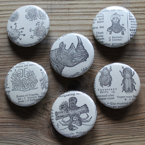 6 pinback buttons: Rhinoceros, Beetle, Cell Structures, and other antique images - RadCakes Shirt Printing