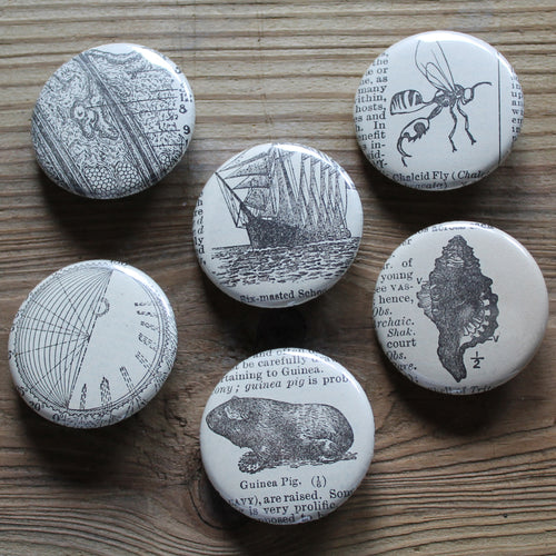 6 pinback buttons: Guinea Pig, Sea Shell, Schooner Ship, and other antique images - RadCakes Shirt Printing